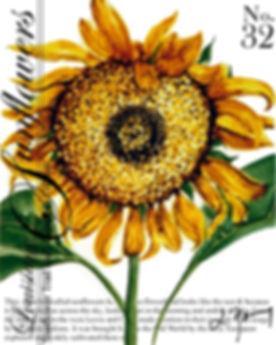 louisiana sunflower 31.jpg