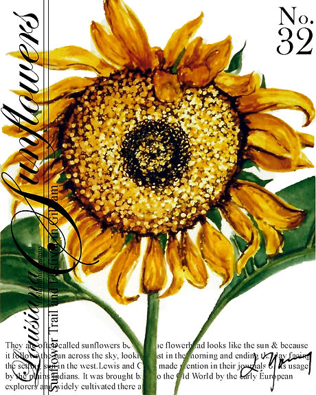 louisiana sunflower 31.jpg