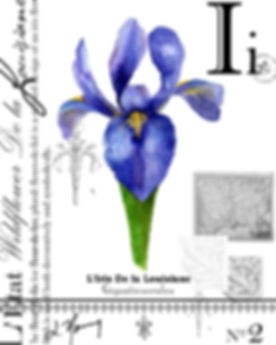 La Iris Final.jpg
