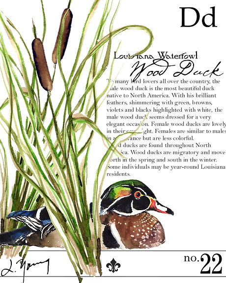 louisiana wood duck final-2.JPG