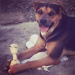 Alegria por um osso babado é contagiante! Os cachorros assim como todos os animais nos ensinam liçõe