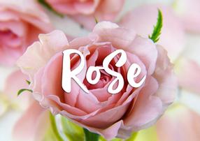 Les personnages: Rose