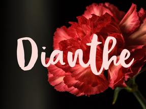 Les personnages: Dianthe (la reine)