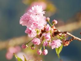 pink%20flowers_edited.jpg