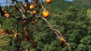 Récoltons en nous les fruits des saisons passées