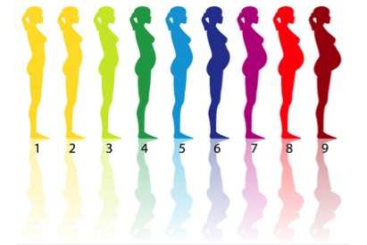 Картинки по запросу беременность по неделям
