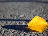 A Yellow Leaf Is Lying on the Asphalt - 02.jpg