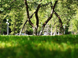 Green Grass and Trees in the Park - 01.jpg
