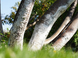 Green Grass and Trees in the Park - 02.jpg