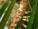 Palm Tree on a Summer Day - 01.jpg