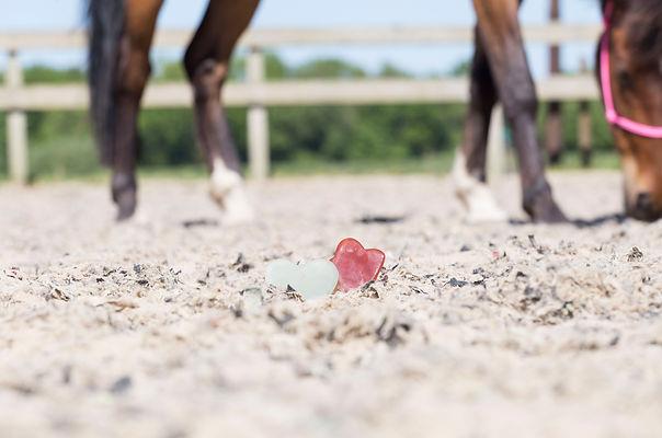 HorseFittraning_5.jpg