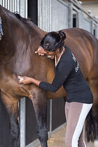 Ragini Horse Care_6.jpg