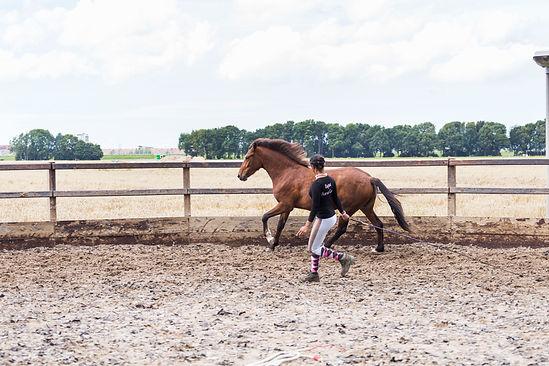 Ragini Horse Care_17.jpg