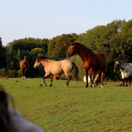Paardenwelzijn