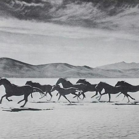 Tips: voor het verhuizen van jouw paard
