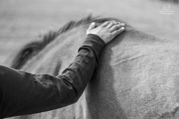 Ragini HorseCare (7 of 154).jpg