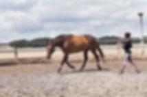 Ragini Horse Care_1.jpg