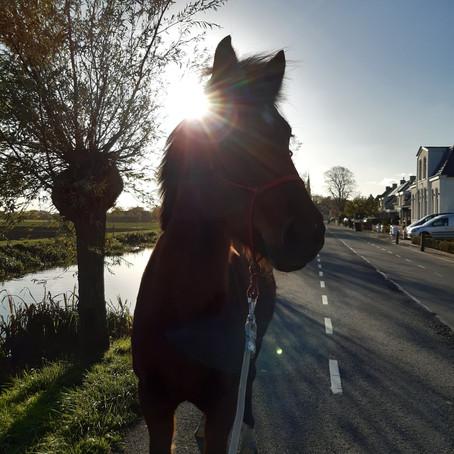 Ontspannen wandelen met jouw paard