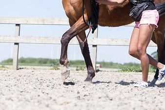 HorseFittraning_2.jpg