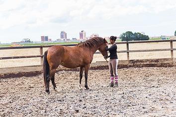Ragini Horse Care_18.jpg