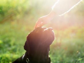 Santa Dica | Câncer em Pets