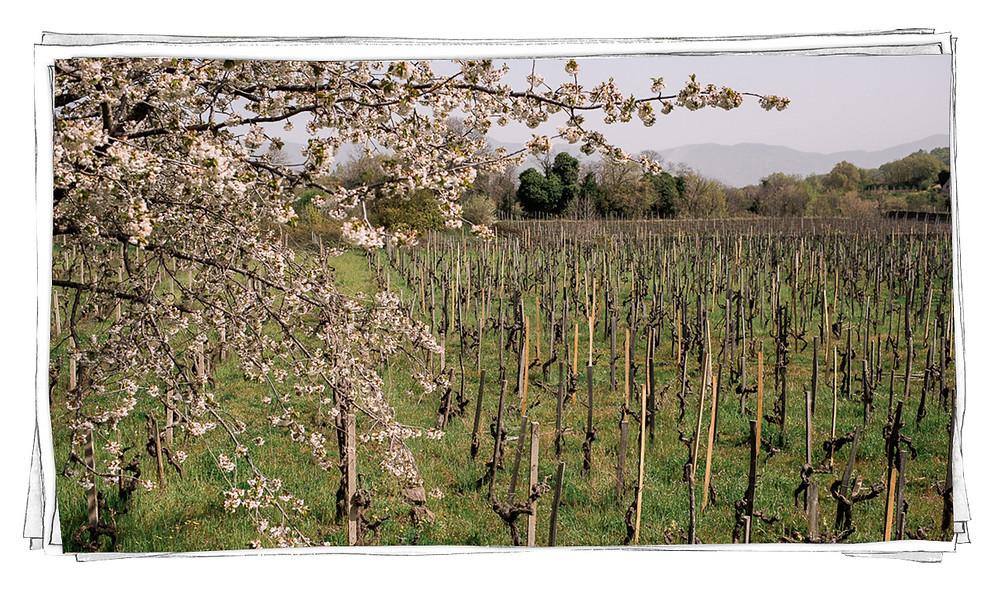 Tenuta di Fessina Etna Sicilia Wine