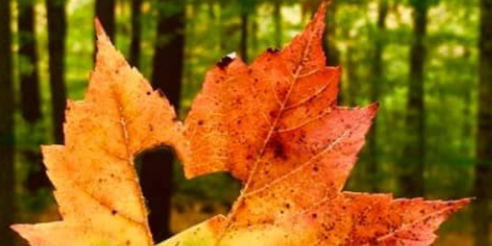 Fall in Love New England: A Romance Reader Meets Authors Conference