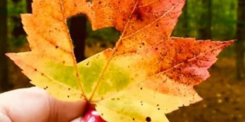 Fall in Love New England: Reader Meets Authors Conference