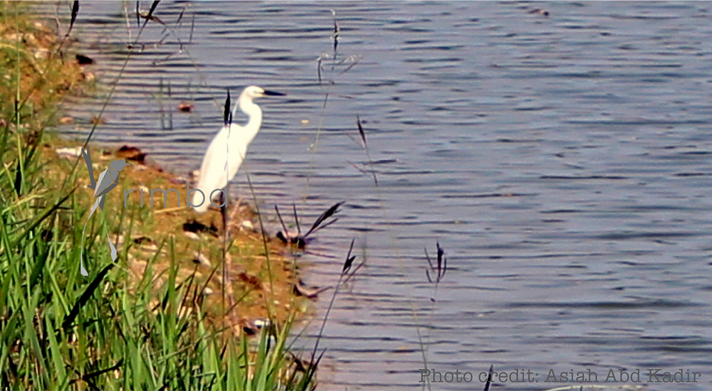 Egret_watermarked.png