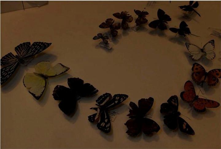 sec12butterflies.jpg
