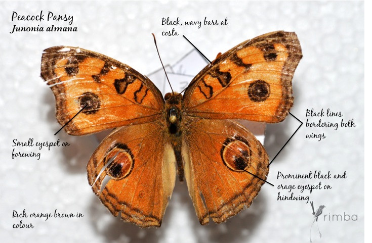 Butterfly_12.jpg