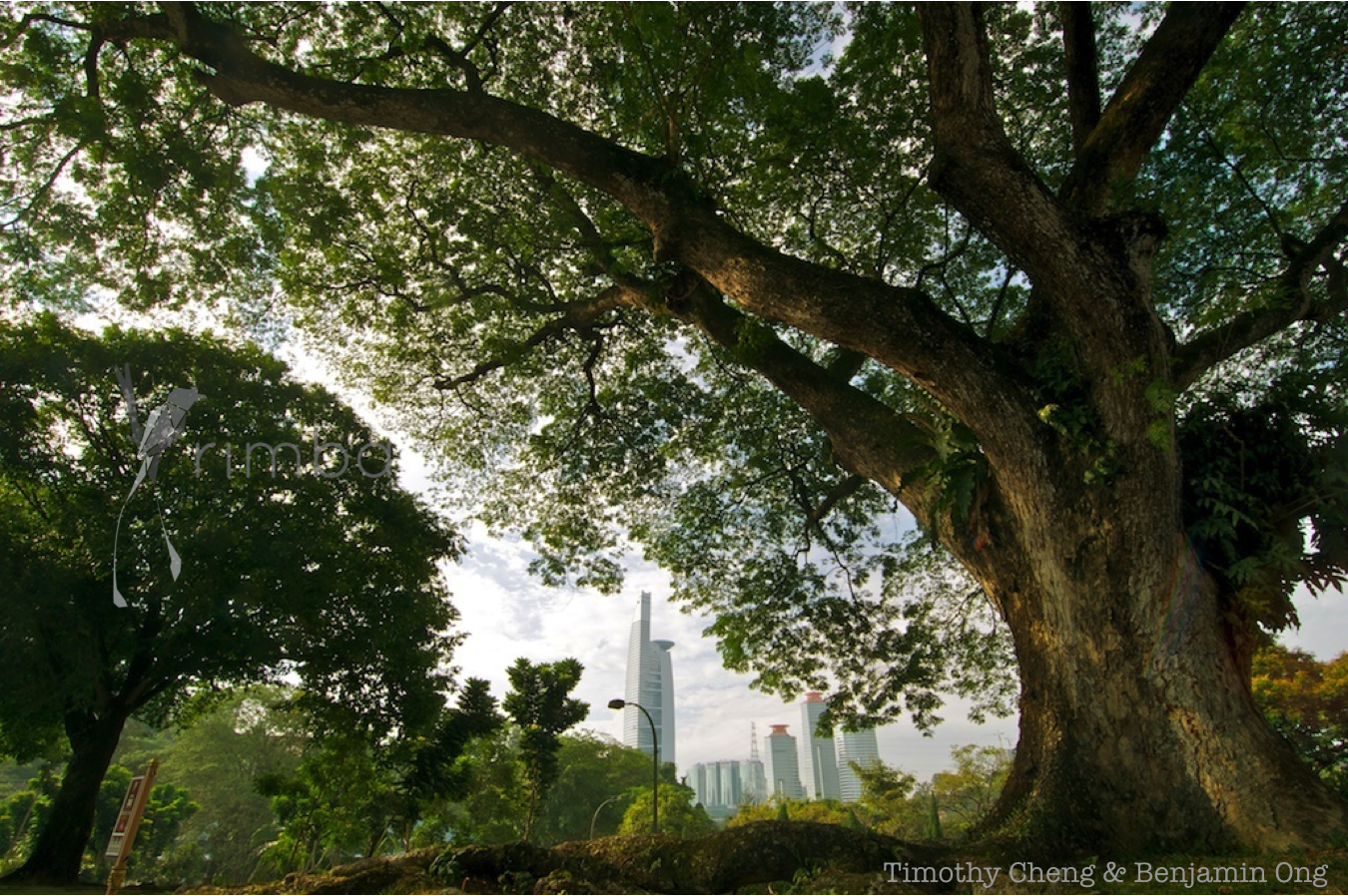 The Value of Biodiversity to Cities