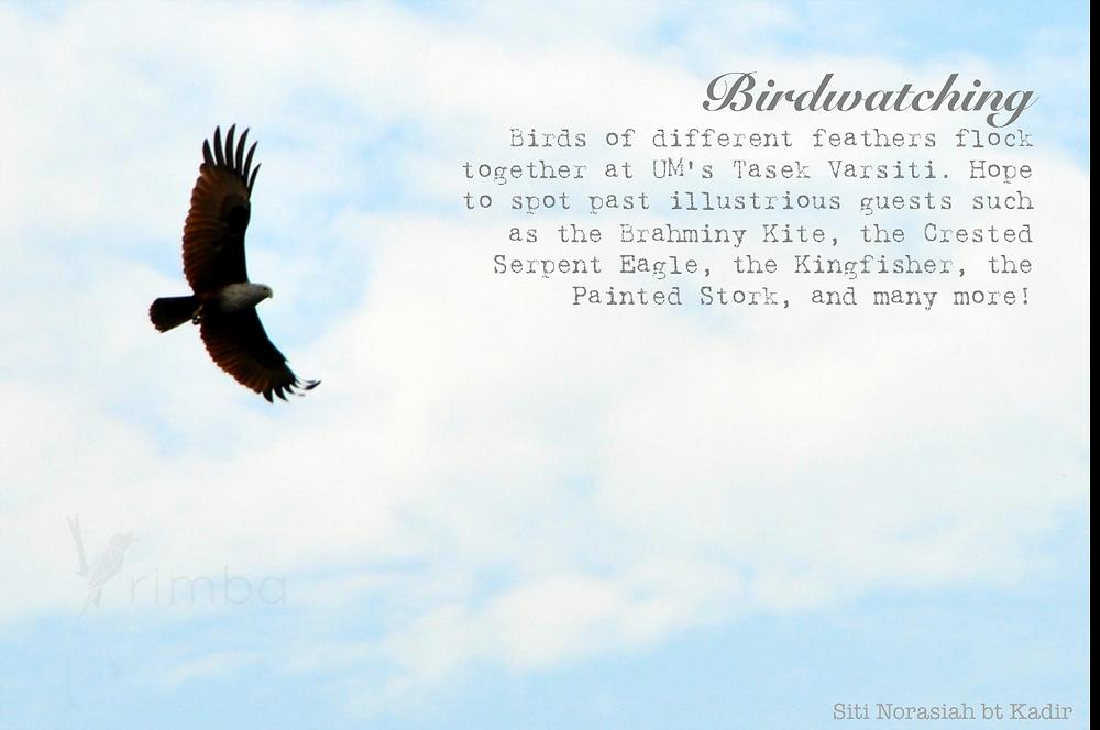 BD_birdwatching.png