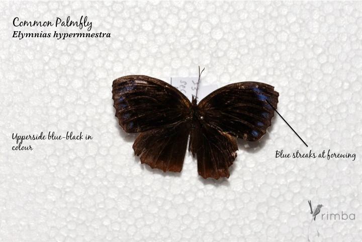 Butterfly_9.jpg