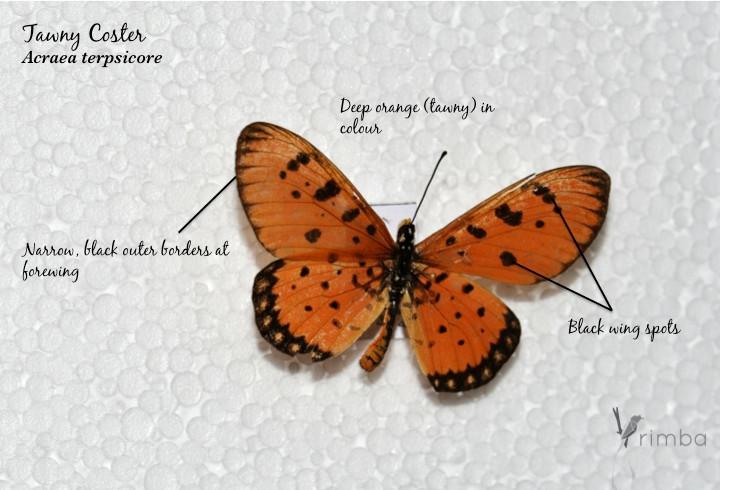 Butterfly_11.jpg