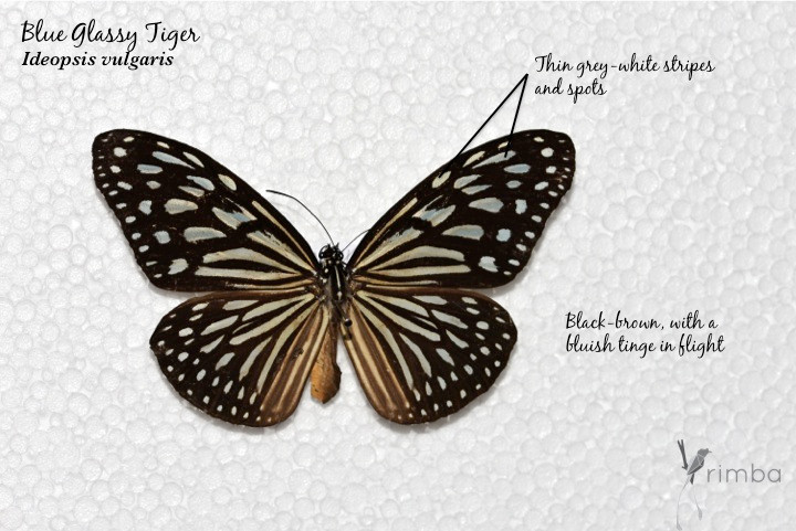 Butterfly_13.jpg