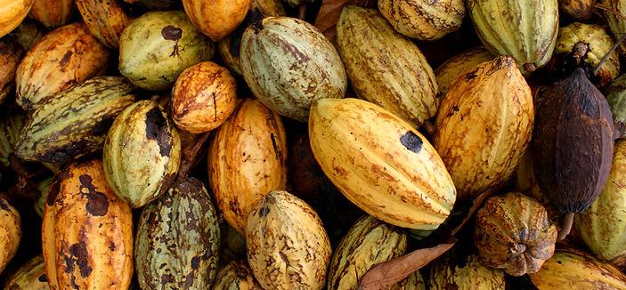 Natural State Organic Wholefood Snacks