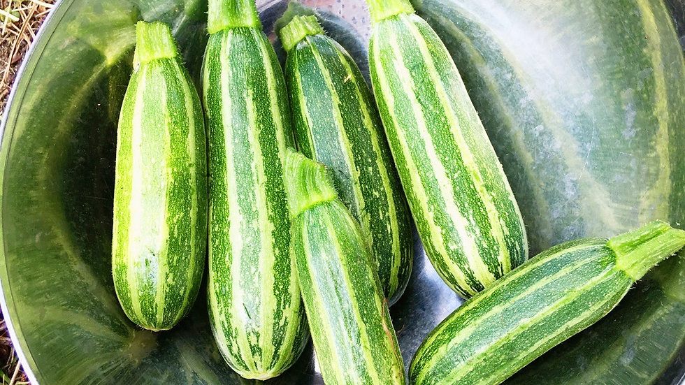 Mini courgette variatie