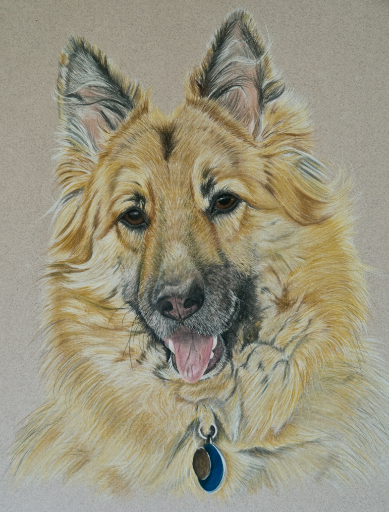 dog-Pastel-portrait-10