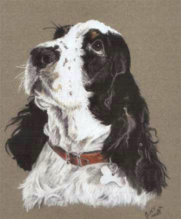dog-Pastel-portrait-4