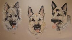 dog-Pastel-portrait-8