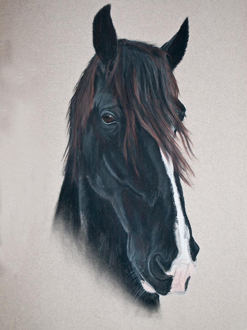 horse-pastel-portrait-2