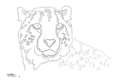 Miche's-Cheetah.jpg