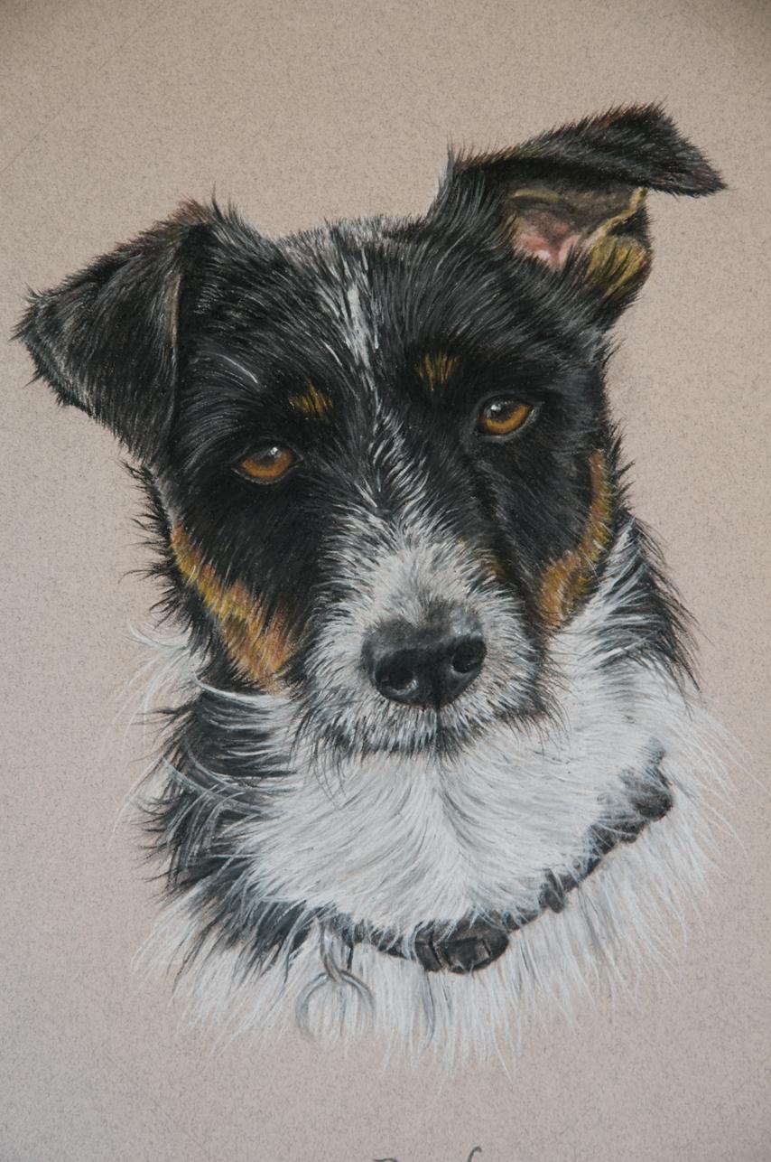 dog-Pastel-portrait-9