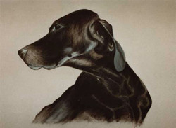 dog-Pastel-portrait-7