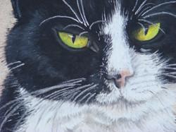 Cat-Pastel-portrait-2