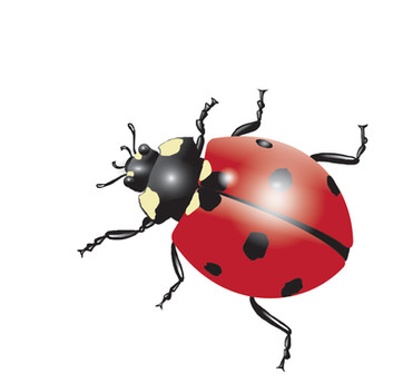 Ladybird-Drawing.jpg