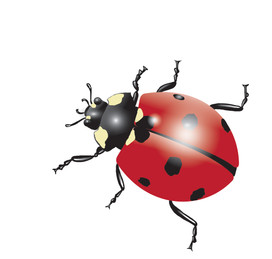 Ladybird-Drawing.jpg
