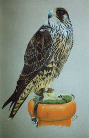 Bird-Pastel-portrait-1