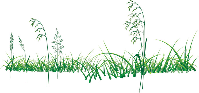 Grass-Drawing.jpg